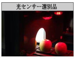 光センサー選別機