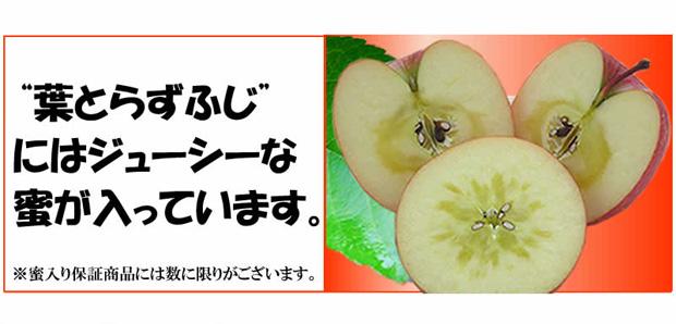 蜜入りりんご葉とらずサンふじ