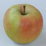 青森りんご ぐんま名月